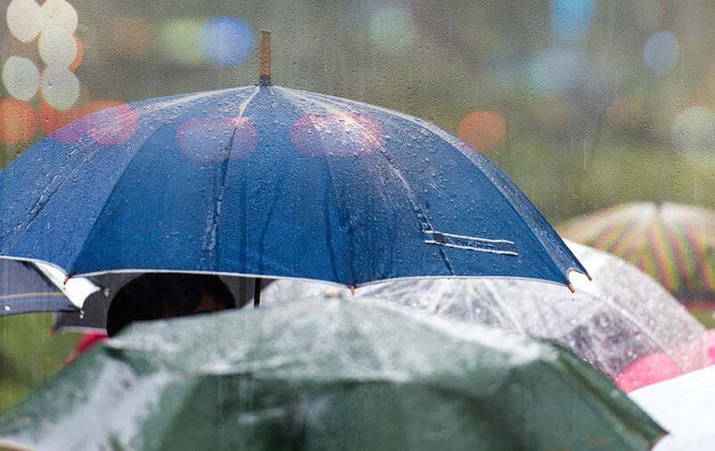 sacos para guarda-chuva